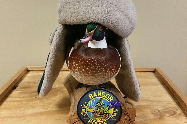 Bangor Maine Police Department via Facebook